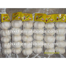 Cangshan Nuevo Fresh Chinese Normal White Garlic