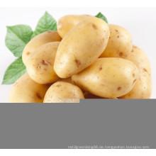 Neue Ernte Fresh Potato (200 g und mehr)