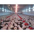 Automatische landwirtschaftliche Ausrüstung im Geflügel-Haus mit ökonomischem Design