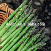 frozen dried white or green asparagus