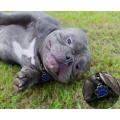 Nette Namensschilder des Hundes personalisiert