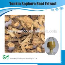 Chinese herba medicine extrahieren Tonkin Sophora Wurzel Extrakt