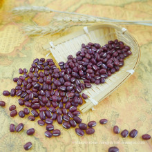 Professional manufacture 4.5-6.0mm Adzuki bean small, red bean, vigna bean