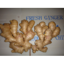 2015 New Crop Air Dry Ginger for Sale
