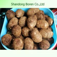 100% Natur frisch Taro aus China
