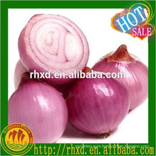 2016 Chinese competitive onion seeds price
