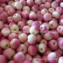 2016 New Crop paper Bagged Gala Apple