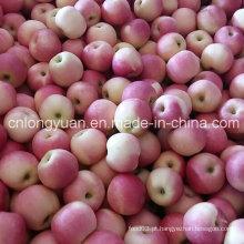 2016 Gala nova ensacada saco da colheita Apple