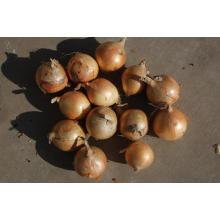 Export gute Qualität frische chinesische gelbe Zwiebel