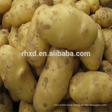 Fresh potatoes export bangladesh