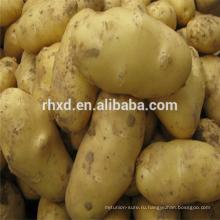 Свежий картофель экспорта Бангладеш