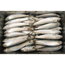 Свежая рыба Сардинелла Лемуру