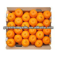 fresh orange om china