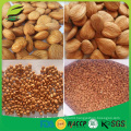 High quality organic china apricot nut apricot kernel