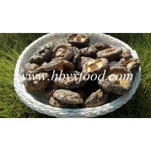 Guter Preis getrockneter Shiitake / getrockneter glatter Shiitake Pilz