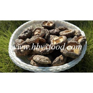 Bom Preço Seco Shiitake / Secas Cogumelo Shiitake