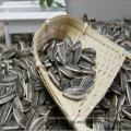 Sementes de girassol chinês 5009