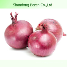 2015 Chinesische Gemüse Frische rote Zwiebel