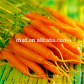 China fresh produce carrots price 2017