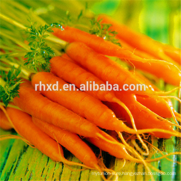 China fresh produce carrots price 2017