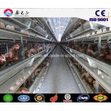 Estructura de acero prefabricada Casa de aves de corral automática, casa de pollo con equipos (JW-16206)