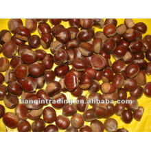 chinese fresh chestnut