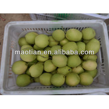Fresh Shandong Pear