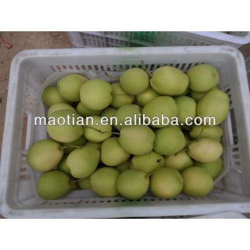 Pera fresca de Shandong