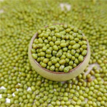 premier qualtiy Green Mung Beans pour la germination, MC, type 2016,