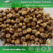 Agaricus Subrufescens Extract, Agaricus Subrufescens Extract Polysaccharides, Agaricus Subrufescens Extract 20:1