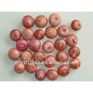 Chinese Fresh Red Onion producer
