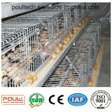High Quality Automatic Chicken Coop Pullet Raising Equipment