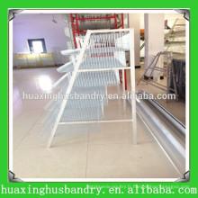 Cage de caille de conception de bonne qualité à vendre
