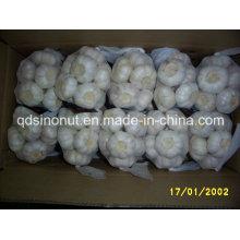 Frischer Knoblauch Reines Weiß und Normal Weiß 250g