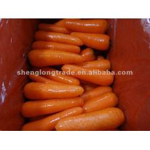2012 Chine carotte frais de qualité supérieure