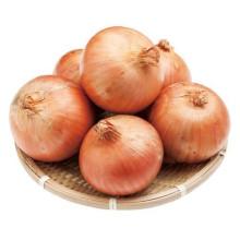 Best fresh yellow onion price ton