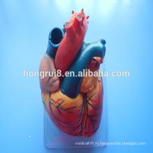 ГОРЯЧИЕ ПРОДАЖИ Человеческая взрослая анатомия Сердце Медицинская модель, Пластическая модель сердца