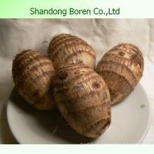 Taro fresco de la alta calidad y de la venta caliente