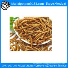 Lower Price Dried Mealworms for Poultry Pet Food Chicken Feed Birds Food
