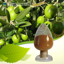 Hochwertiges Olivenblatt-Extrakt-Pulver Oleuropein 80%