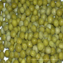 Canned Green Peas with Dry Material / Fresh Material / in Tins / in Glass Jar