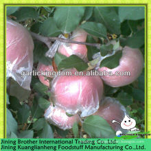 Упакованный в яблоки яблоко fuji