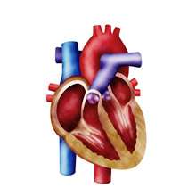 (D-Ribose) -Improve Heart Function D-Ribose