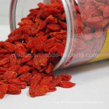 HACCP Nativo tradicional chino Wolfberry