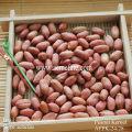 Peanut Kernel 24/28