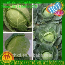 Good Round Fresh Cabbage Price Cabbage Seed
