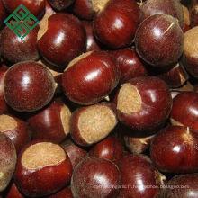 châtaignes chinoises / marrons séchés à vendre