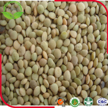 2016 Fresh New Dried Green Lentils