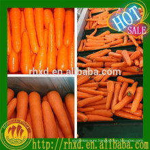 high quality carrot S-L bulk fresh carrot for Malaysia
