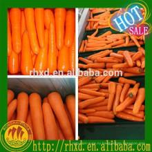 высокое качество морковный С-Л оптом морковь свежая-Малайзия